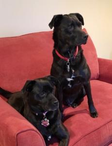Dog Veterinarian Miami