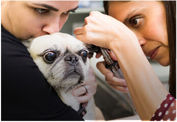 Veterinarian Skin, Ear & Allergy Care Specialists Miami