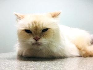 Cat Veterinarian Miami