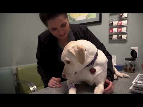 Miami Vet Derm - Pet Dermatology Specialists in Miami